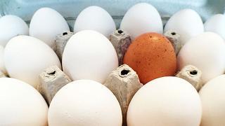 Uova al fipronil, 2 casi in Campania
