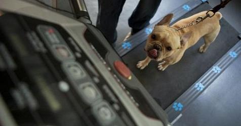 Costretto a viaggiare nella cappelliera dell 39 aereo un cane for Cane nella cabina dell aereo