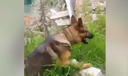 Morto Avvelenato Kaos Il Cane Eroe Di Amatrice Rai News