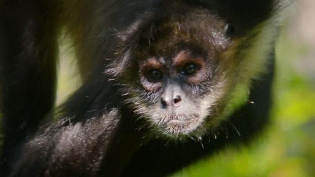 Rai 5 Monkeys - Il pianeta dei primati - E3