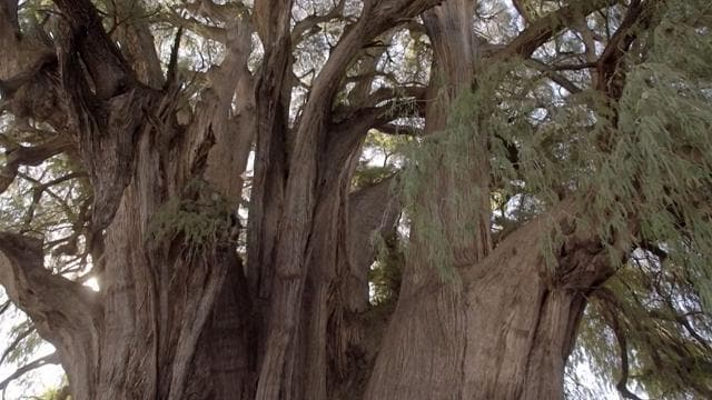 Rai 5 Tree Stories - Alberi che racccontano - S2E2