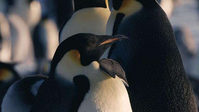 Rai 5 Antartide - E1