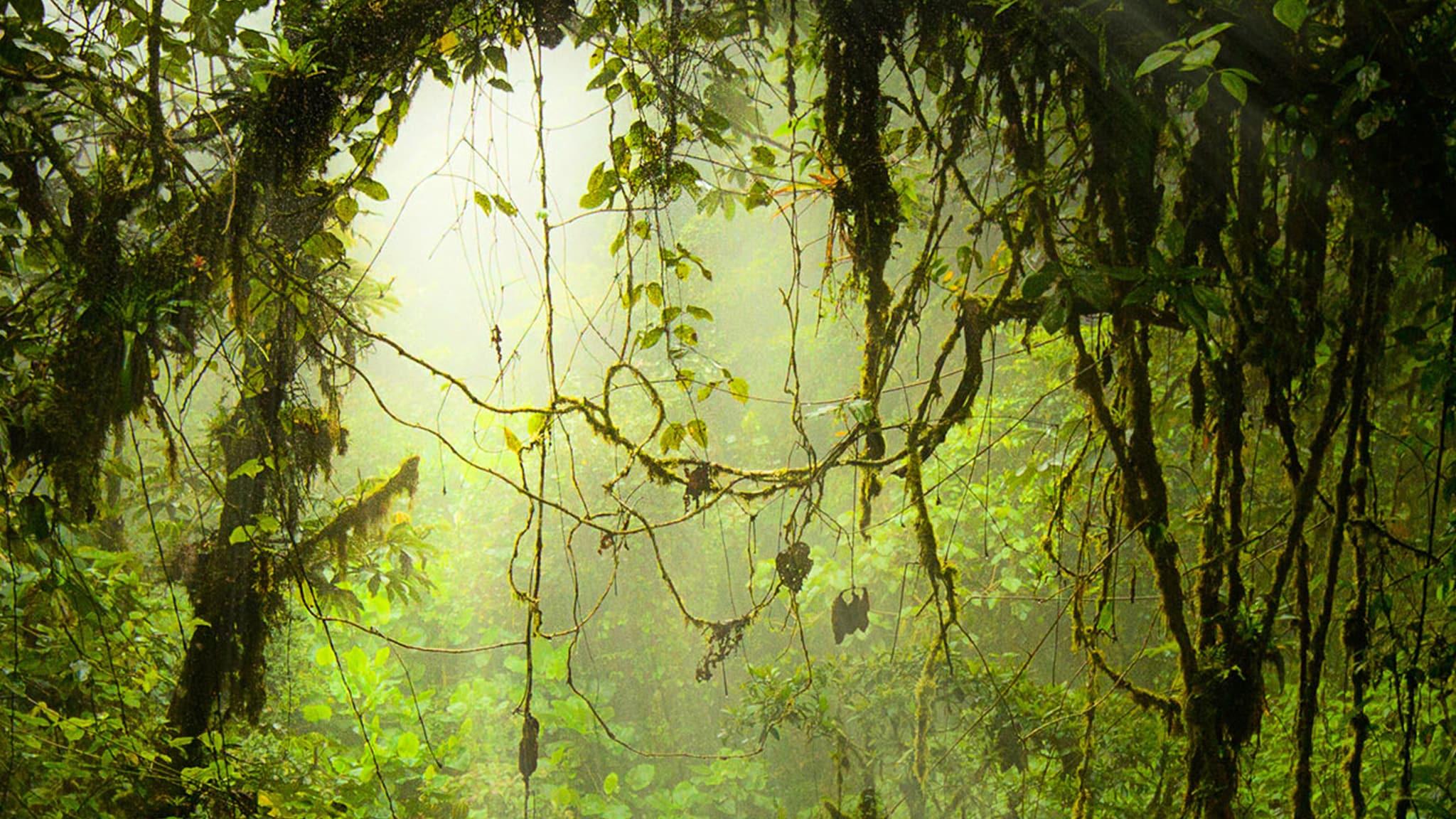 Rai Scuola I meccanismi della natura La foresta temperata