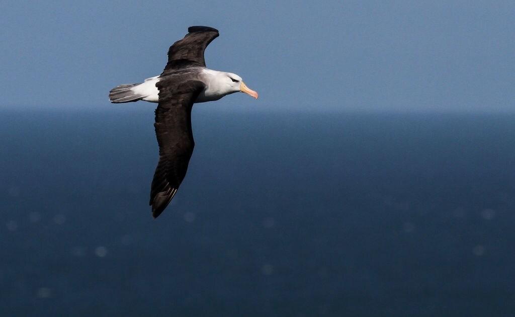 """Uccelli spia contro la pesca illegale: a Parigi """"Operazione Albatros"""""""