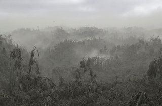 Sepolta dalla cenere dell'eruzione di Taal: tutta morta la flora e la fauna intorno al vulcano - Rai News
