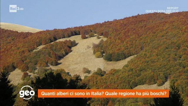 Geo quanti alberi ci sono in italia video raiplay for Quanti sono i senatori in italia