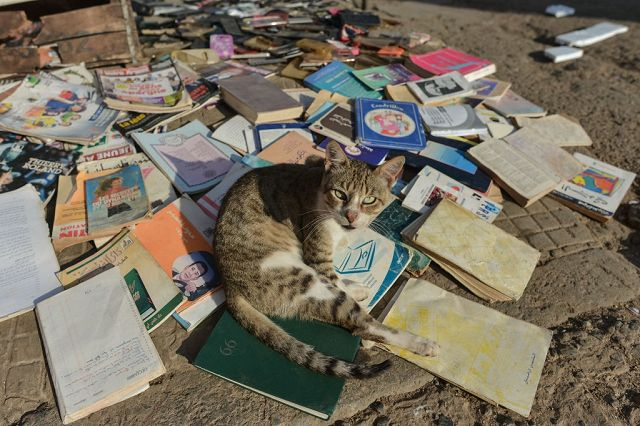 Turista Inglese Morso Da Un Gatto In Marocco Muore Di Rabbia