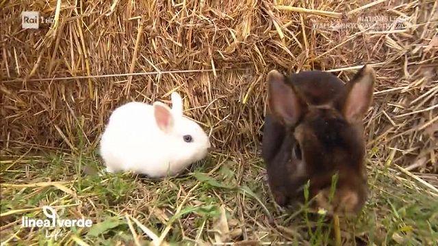 Linea Verde Conigli Da Compagnia Video Raiplay